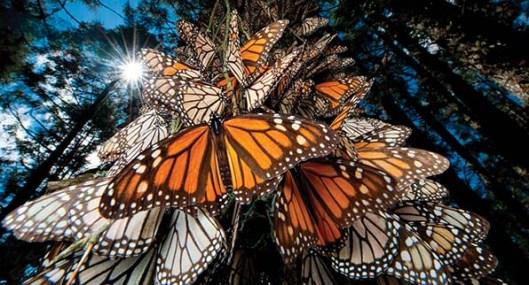el-vuelo-de-la-mariposa