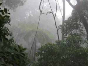 colombia-bosque-de-niebla-animales-biodiversidad-6-683x512