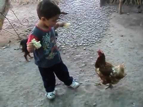 La gallina Josefina
